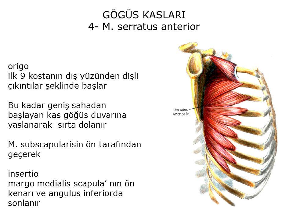 GÖGÜS KASLARI 4- M.