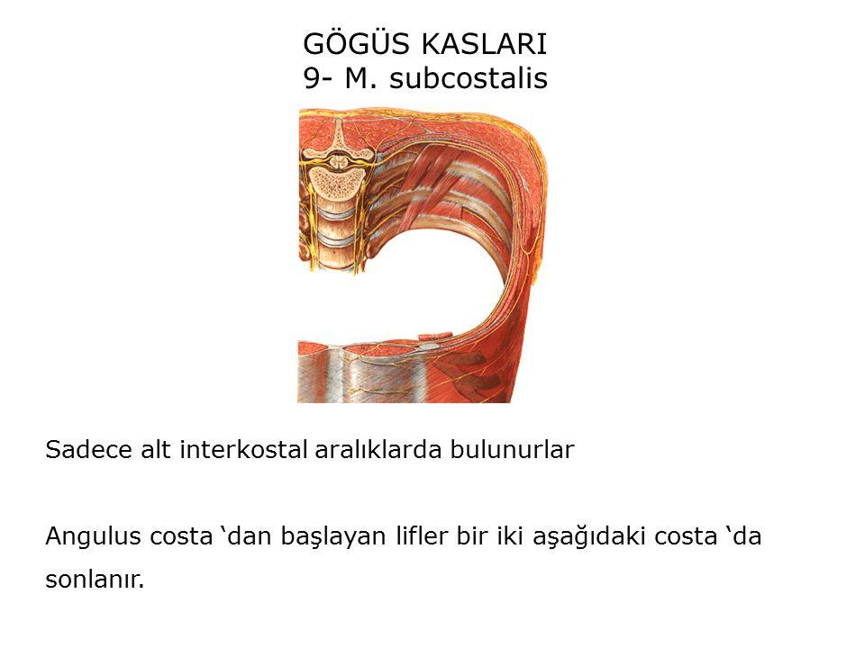 GÖGÜS KASLARI 9- M.