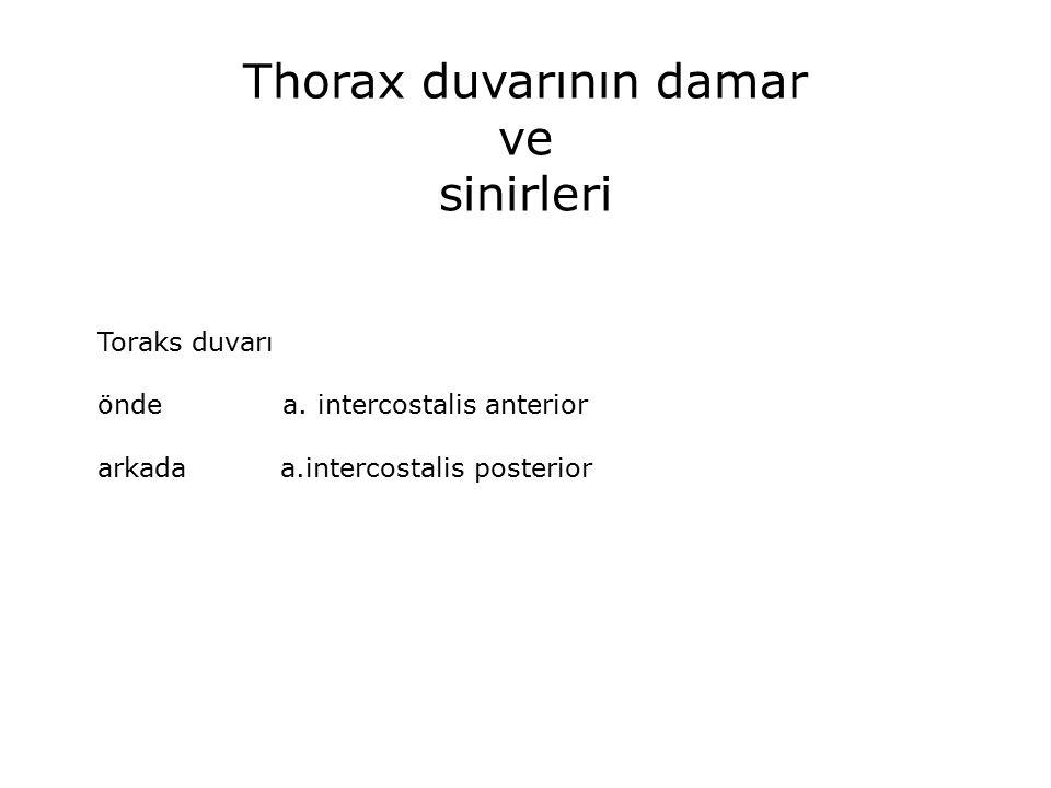 Thorax duvarının damar ve sinirleri Toraks duvarı önde a.