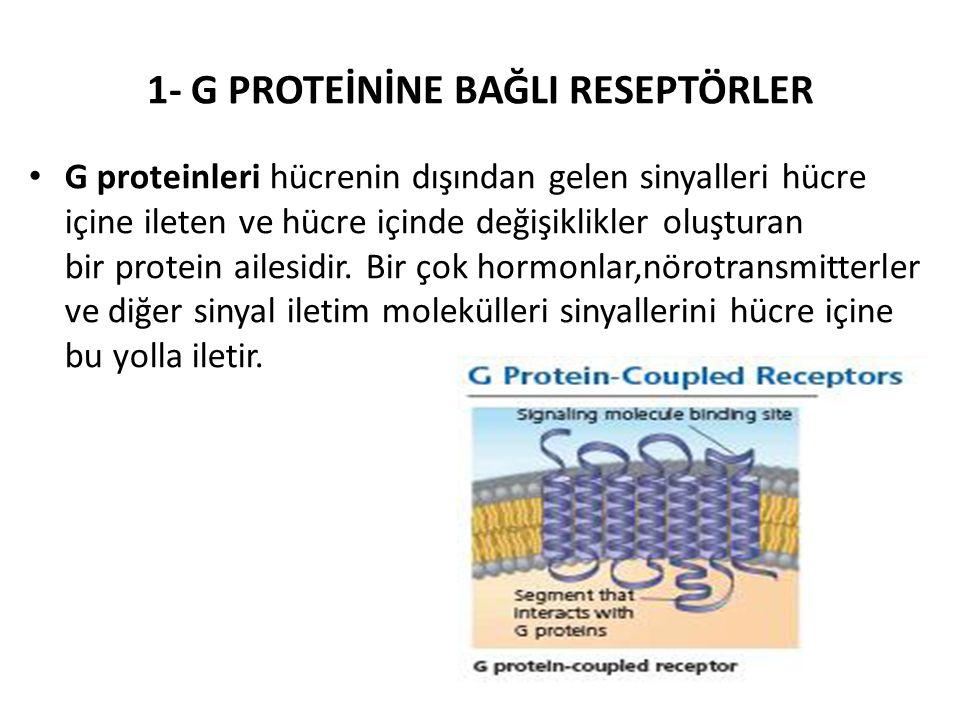 1- G PROTEİNİNE BAĞLI RESEPTÖRLER G proteinleri hücrenin dışından gelen sinyalleri hücre içine ileten ve hücre içinde değişiklikler oluşturan bir prot