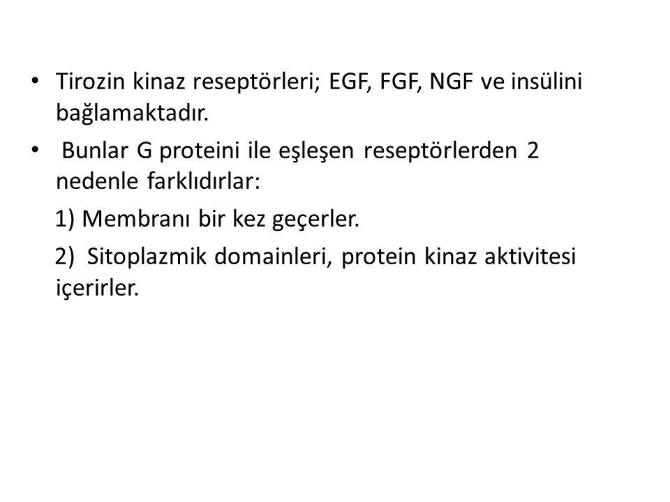 Tirozin kinaz reseptörleri; EGF, FGF, NGF ve insülini bağlamaktadır. Bunlar G proteini ile eşleşen reseptörlerden 2 nedenle farklıdırlar: 1) Membranı