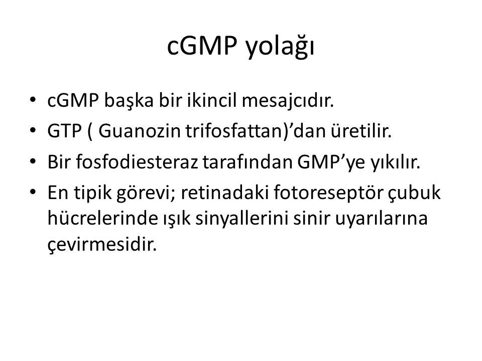 cGMP yolağı cGMP başka bir ikincil mesajcıdır. GTP ( Guanozin trifosfattan)'dan üretilir. Bir fosfodiesteraz tarafından GMP'ye yıkılır. En tipik görev