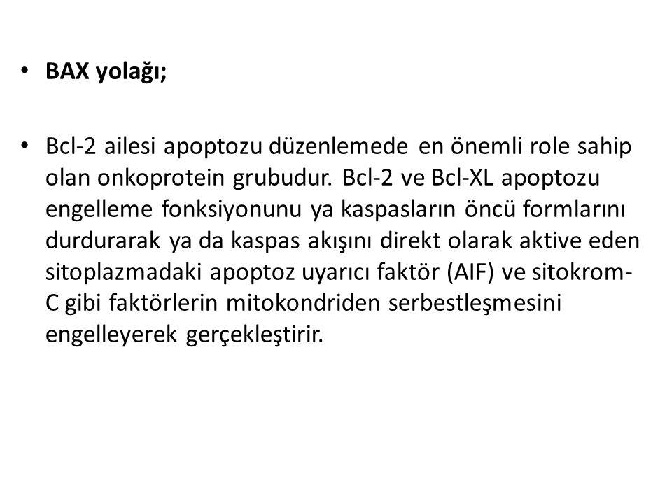 BAX yolağı; Bcl-2 ailesi apoptozu düzenlemede en önemli role sahip olan onkoprotein grubudur. Bcl-2 ve Bcl-XL apoptozu engelleme fonksiyonunu ya kaspa