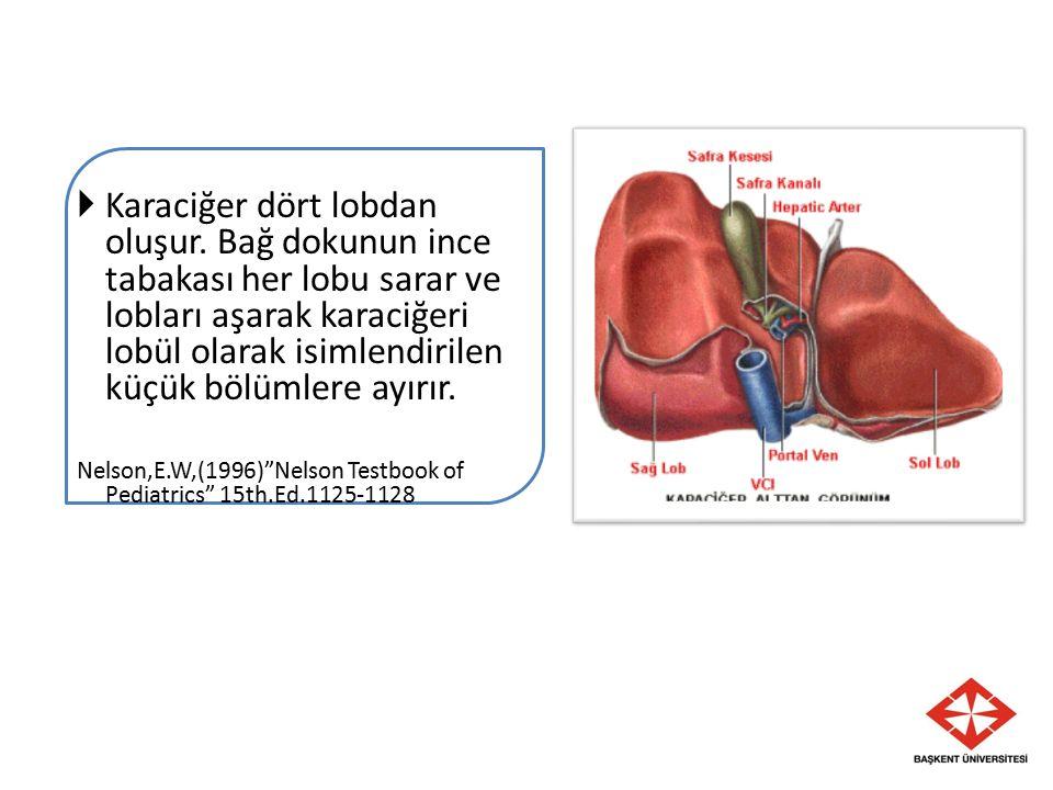  Karaciğer dört lobdan oluşur. Bağ dokunun ince tabakası her lobu sarar ve lobları aşarak karaciğeri lobül olarak isimlendirilen küçük bölümlere ayır
