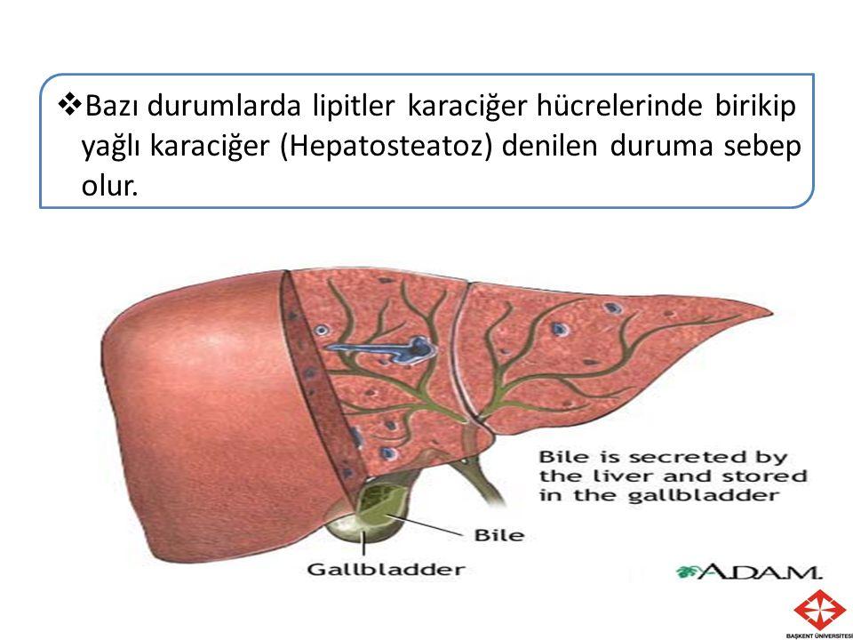  Bazı durumlarda lipitler karaciğer hücrelerinde birikip yağlı karaciğer (Hepatosteatoz) denilen duruma sebep olur.