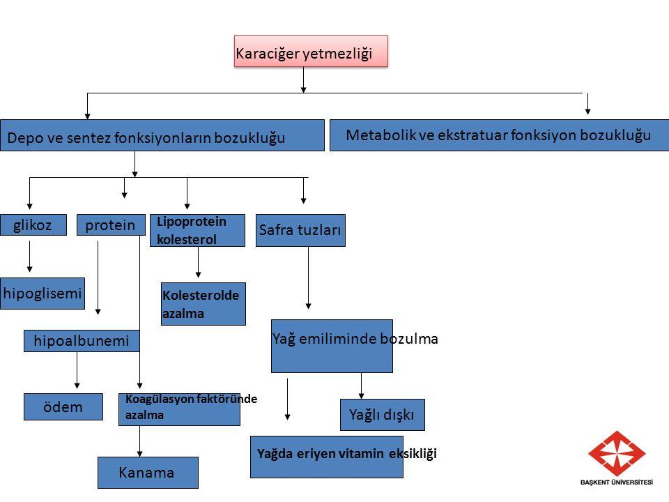 Karaciğer yetmezliği Depo ve sentez fonksiyonların bozukluğu Metabolik ve ekstratuar fonksiyon bozukluğu glikozprotein Lipoprotein kolesterol Safra tu