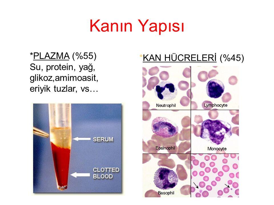 Kanın Görevleri TAŞIMA: Hücreler ile dış ortam arasında madde taşır.