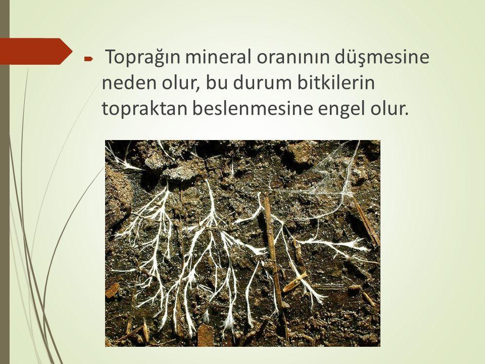  Toprağın mineral oranının düşmesine neden olur, bu durum bitkilerin topraktan beslenmesine engel olur.