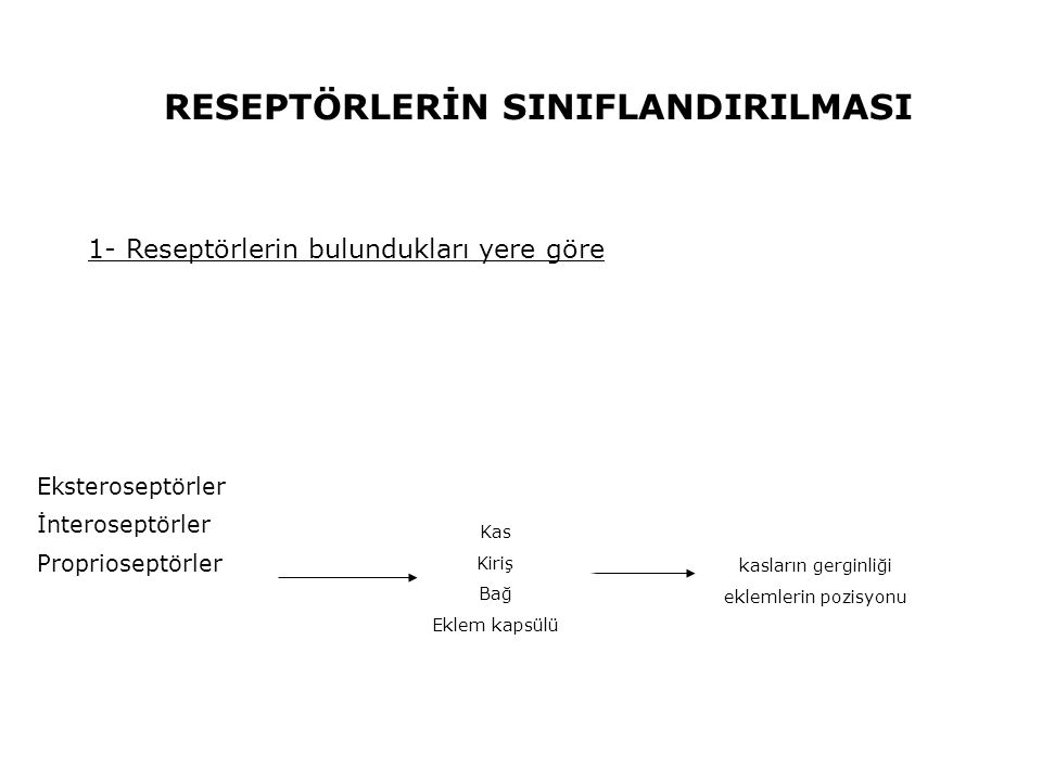 Eksteroseptörler İnteroseptörler Proprioseptörler RESEPTÖRLERİN SINIFLANDIRILMASI 1- Reseptörlerin bulundukları yere göre Kas Kiriş Bağ Eklem kapsülü kasların gerginliği eklemlerin pozisyonu