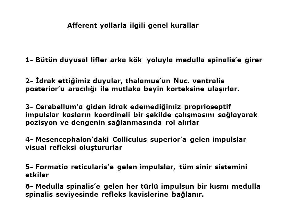 Afferent yollarla ilgili genel kurallar 1- Bütün duyusal lifler arka kök yoluyla medulla spinalis'e girer 2- İdrak ettiğimiz duyular, thalamus'un Nuc.