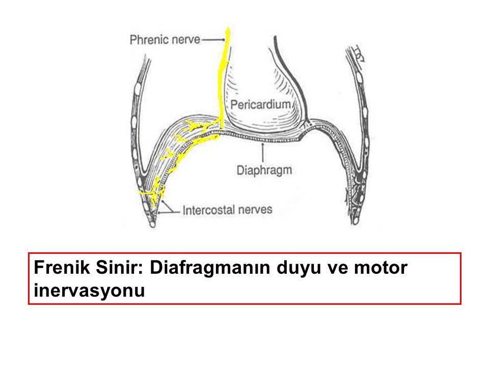 Tedavi Kardiorespiratuvar stabilizasyon Nazo-orogastrik tüp takılması Konj.