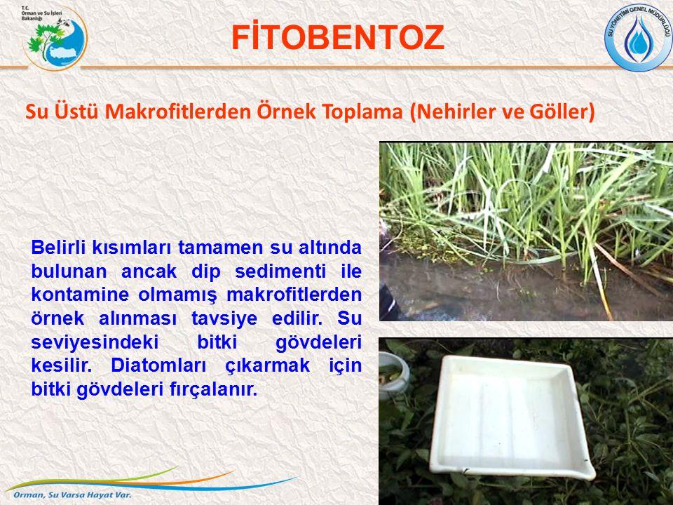 Su Üstü Makrofitlerden Örnek Toplama (Nehirler ve Göller) 37 FİTOBENTOZ Belirli kısımları tamamen su altında bulunan ancak dip sedimenti ile kontamine olmamış makrofitlerden örnek alınması tavsiye edilir.