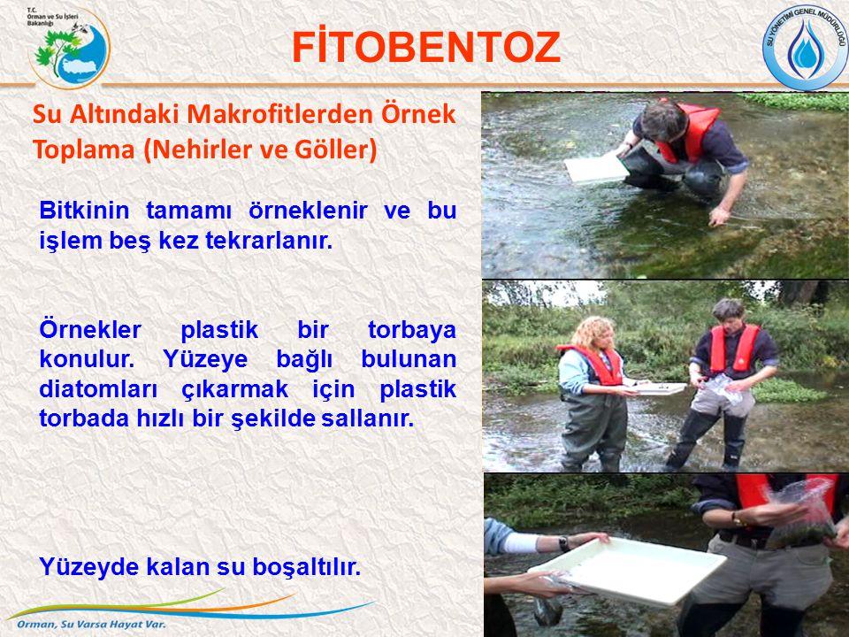 Su Altındaki Makrofitlerden Örnek Toplama (Nehirler ve Göller) 38 FİTOBENTOZ Bitkinin tamamı örneklenir ve bu işlem beş kez tekrarlanır. Örnekler plas
