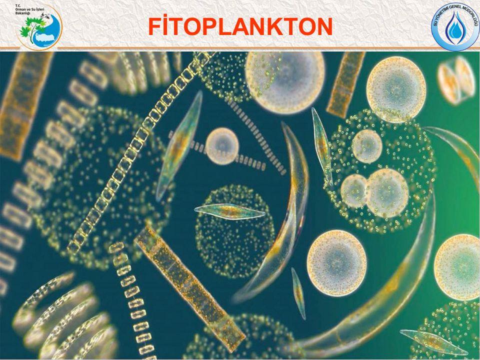 Fitoplankton Fitoplankton, sucul ortamlarda fototrofik büyüme gösteren serbest yüzme özelliğine sahip tek hücreliler ve koloniler olarak tanımlanmaktadır.
