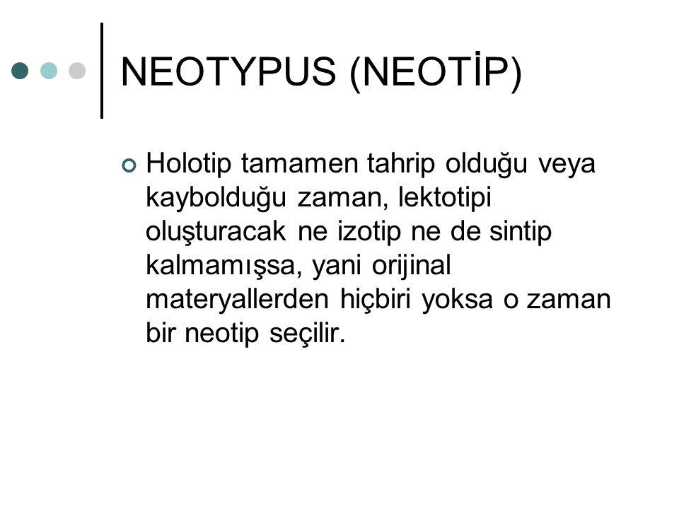 NEOTYPUS (NEOTİP) Holotip tamamen tahrip olduğu veya kaybolduğu zaman, lektotipi oluşturacak ne izotip ne de sintip kalmamışsa, yani orijinal materyal