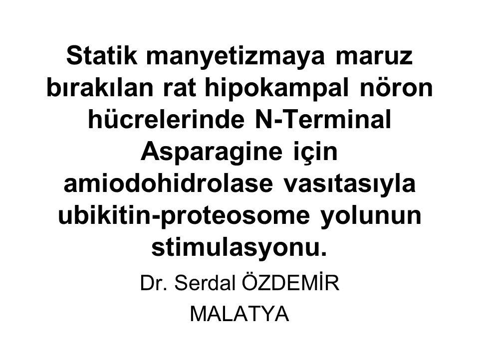 Statik manyetizmaya maruz bırakılan rat hipokampal nöron hücrelerinde N-Terminal Asparagine için amiodohidrolase vasıtasıyla ubikitin-proteosome yolunun stimulasyonu.