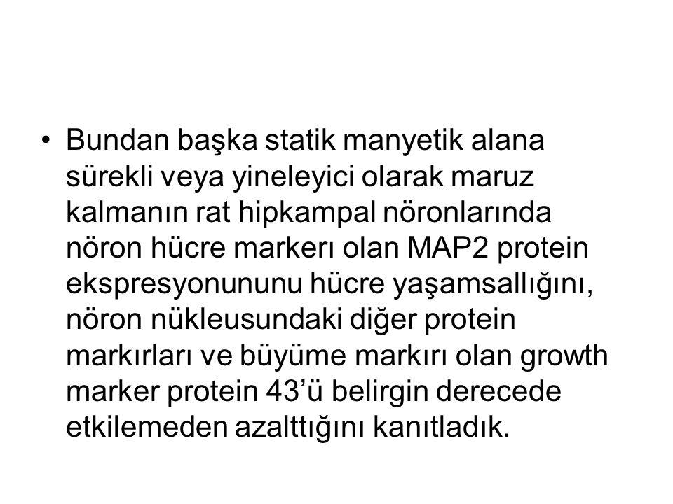 Bundan başka statik manyetik alana sürekli veya yineleyici olarak maruz kalmanın rat hipkampal nöronlarında nöron hücre markerı olan MAP2 protein ekspresyonununu hücre yaşamsallığını, nöron nükleusundaki diğer protein markırları ve büyüme markırı olan growth marker protein 43'ü belirgin derecede etkilemeden azalttığını kanıtladık.