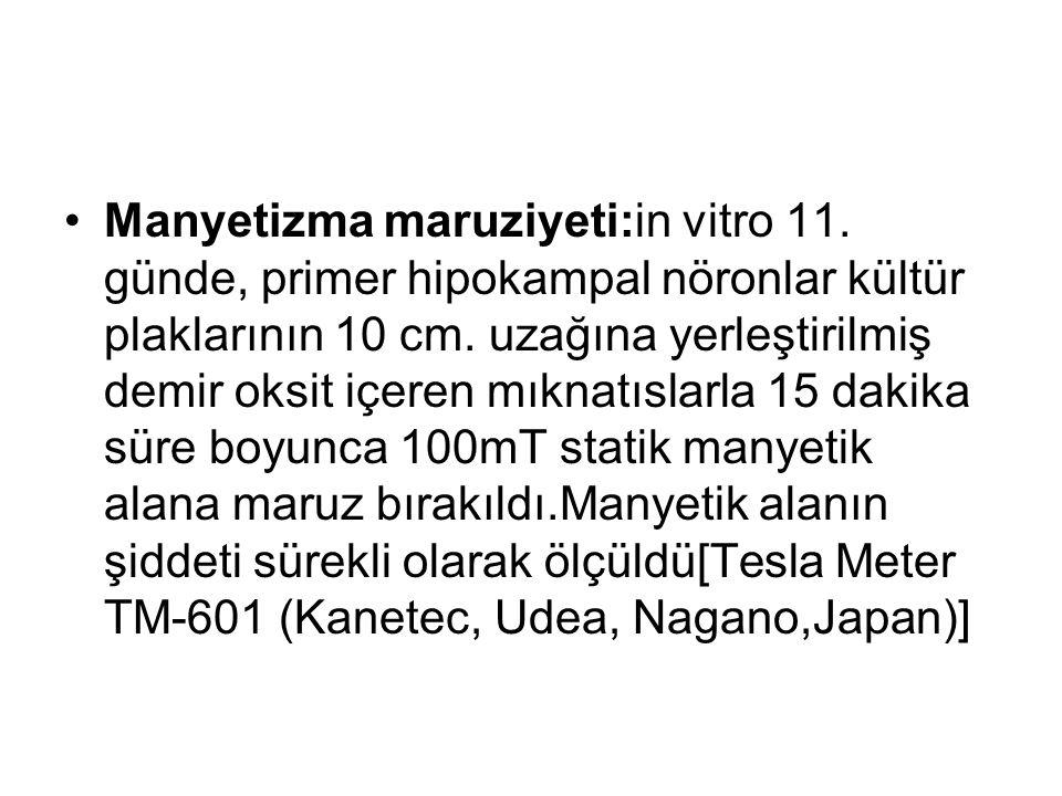 Manyetizma maruziyeti:in vitro 11. günde, primer hipokampal nöronlar kültür plaklarının 10 cm.