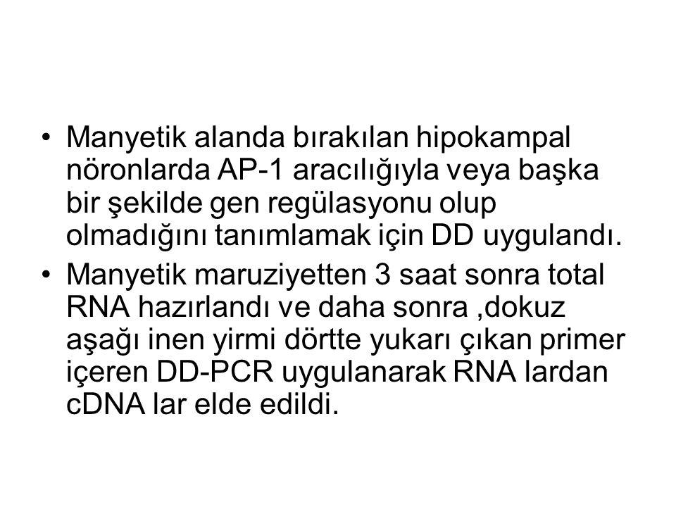 Manyetik alanda bırakılan hipokampal nöronlarda AP-1 aracılığıyla veya başka bir şekilde gen regülasyonu olup olmadığını tanımlamak için DD uygulandı.