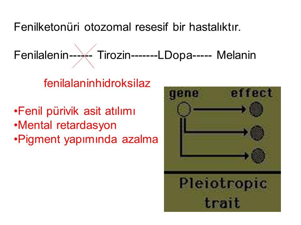 Fenilketonüri otozomal resesif bir hastalıktır. Fenilalenin------ Tirozin-------LDopa----- Melanin fenilalaninhidroksilaz Fenil pürivik asit atılımı M