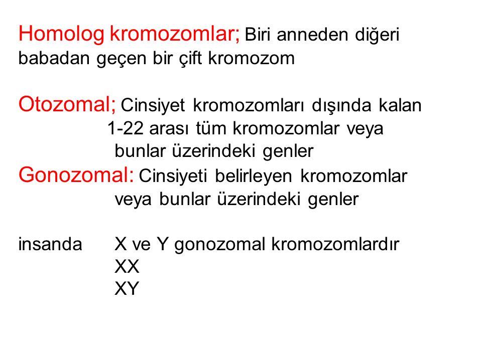 Homolog kromozomlar; Biri anneden diğeri babadan geçen bir çift kromozom Otozomal; Cinsiyet kromozomları dışında kalan 1-22 arası tüm kromozomlar veya