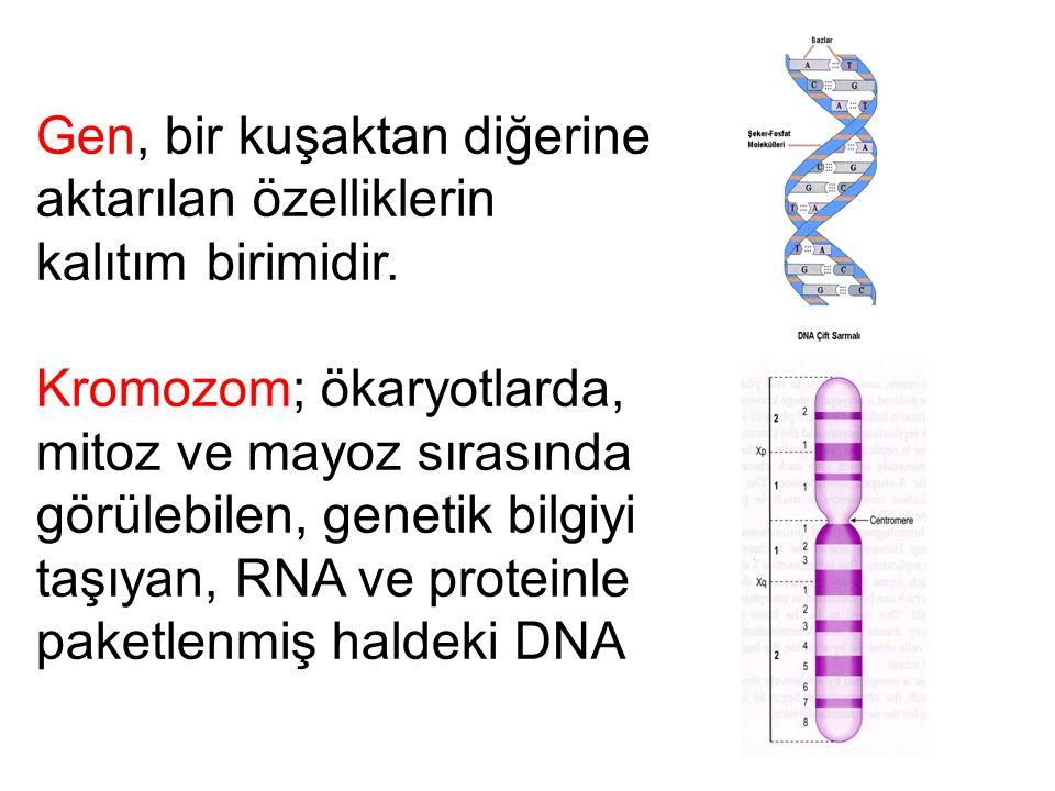 Gen, bir kuşaktan diğerine aktarılan özelliklerin kalıtım birimidir. Kromozom; ökaryotlarda, mitoz ve mayoz sırasında görülebilen, genetik bilgiyi taş