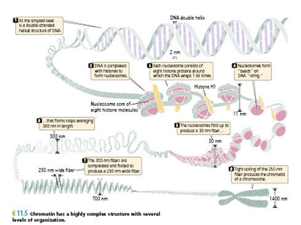 CMT Gene Locations