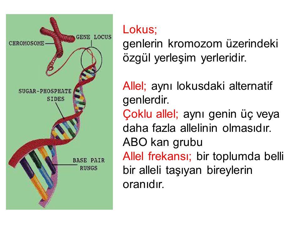 Homolog kromozomlar; Biri anneden diğeri babadan geçen bir çift kromozom Otozomal; Cinsiyet kromozomları dışında kalan 1-22 arası tüm kromozomlar veya bunlar üzerindeki genler Gonozomal: Cinsiyeti belirleyen kromozomlar veya bunlar üzerindeki genler insandaX ve Y gonozomal kromozomlardır XX XY