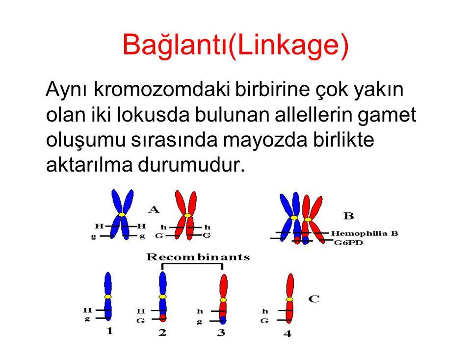 Epigenetik: Genotipi etkilemeden fenotipi etkileyen herhangi bir faktor.