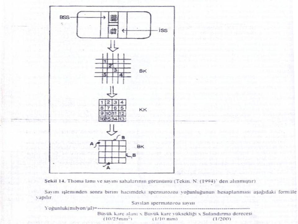 F) BİYOLOJİK MUAYENELER 1) Dayanıklılık Testi 2) Metilen Mavisi Redüksiyon Testi 3) Katalaz Deneyi