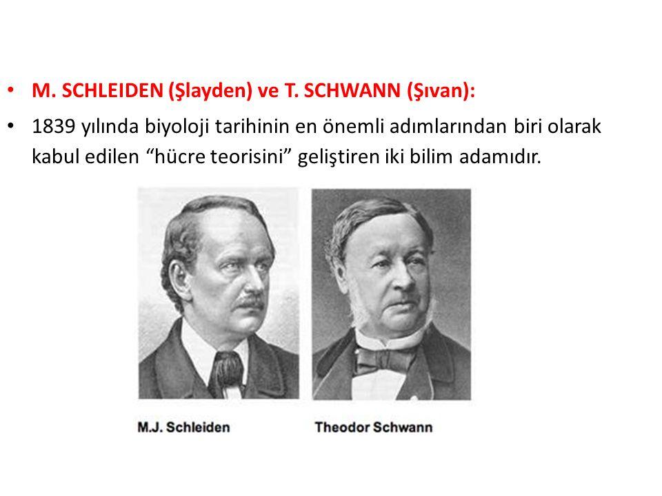 """M. SCHLEIDEN (Şlayden) ve T. SCHWANN (Şıvan): 1839 yılında biyoloji tarihinin en önemli adımlarından biri olarak kabul edilen """"hücre teorisini"""" gelişt"""