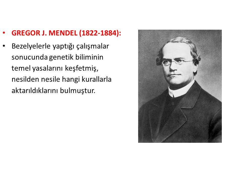 GREGOR J. MENDEL (1822-1884): Bezelyelerle yaptığı çalışmalar sonucunda genetik biliminin temel yasalarını keşfetmiş, nesilden nesile hangi kurallarla