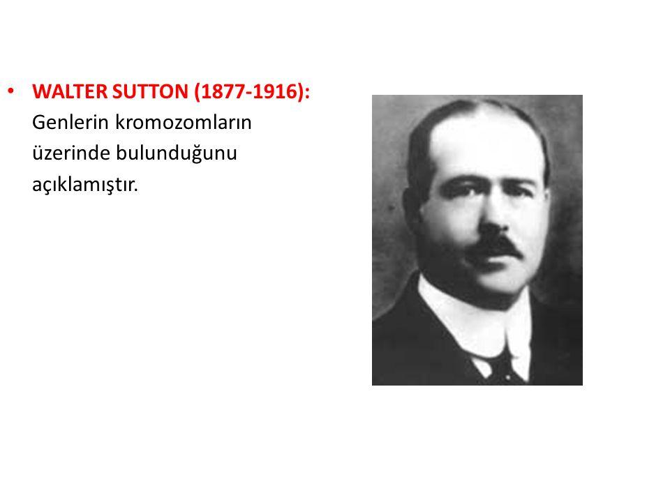 WALTER SUTTON (1877-1916): Genlerin kromozomların üzerinde bulunduğunu açıklamıştır.
