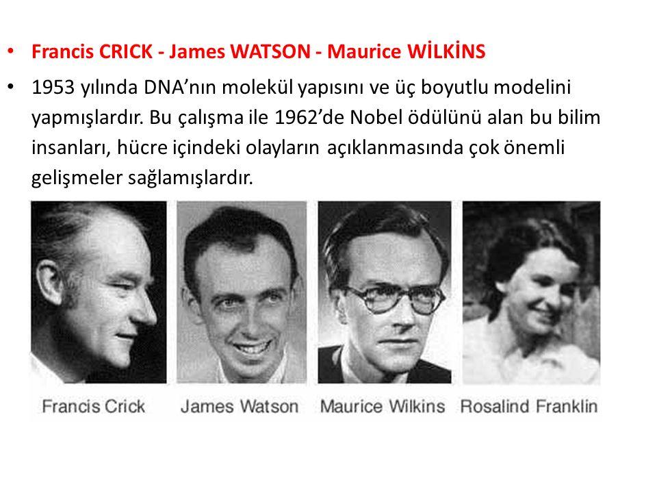 Francis CRICK - James WATSON - Maurice WİLKİNS 1953 yılında DNA'nın molekül yapısını ve üç boyutlu modelini yapmışlardır. Bu çalışma ile 1962'de Nobel
