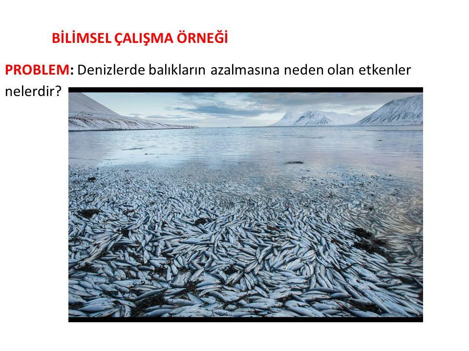 BİLİMSEL ÇALIŞMA ÖRNEĞİ PROBLEM: Denizlerde balıkların azalmasına neden olan etkenler nelerdir?