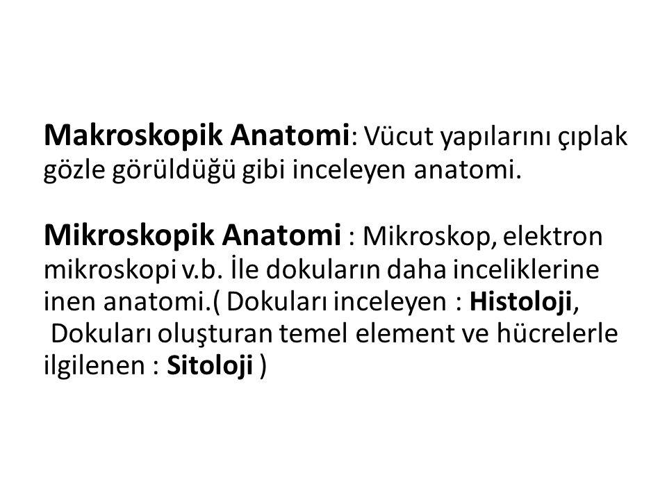 Makroskopik Anatomi : Vücut yapılarını çıplak gözle görüldüğü gibi inceleyen anatomi.