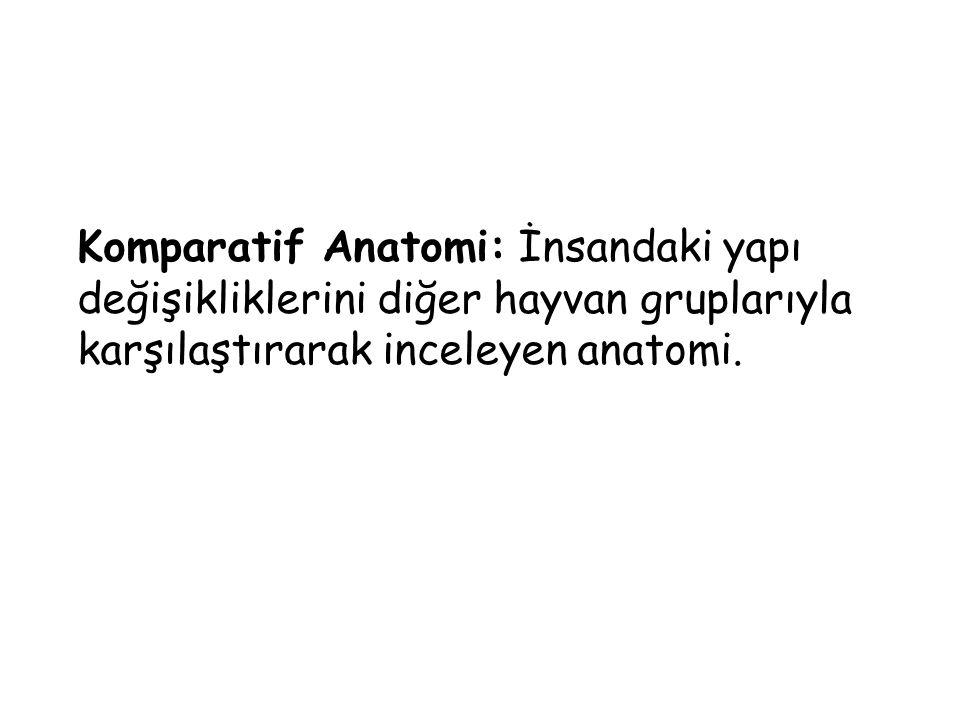 Komparatif Anatomi: İnsandaki yapı değişikliklerini diğer hayvan gruplarıyla karşılaştırarak inceleyen anatomi.