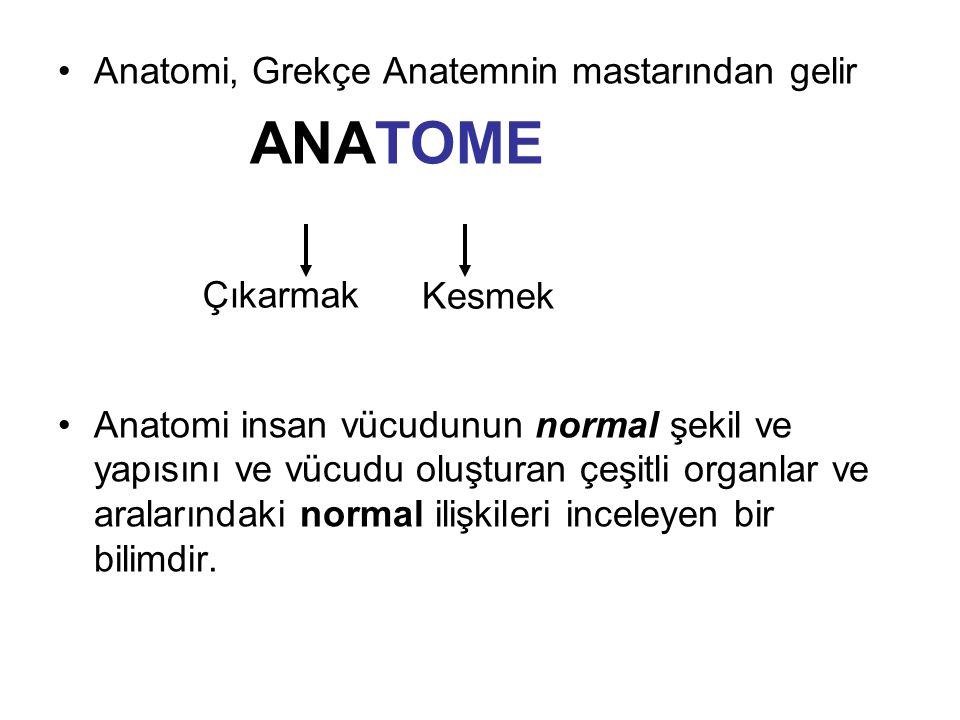 Anatomi, Grekçe Anatemnin mastarından gelir ANATOME Anatomi insan vücudunun normal şekil ve yapısını ve vücudu oluşturan çeşitli organlar ve aralarındaki normal ilişkileri inceleyen bir bilimdir.