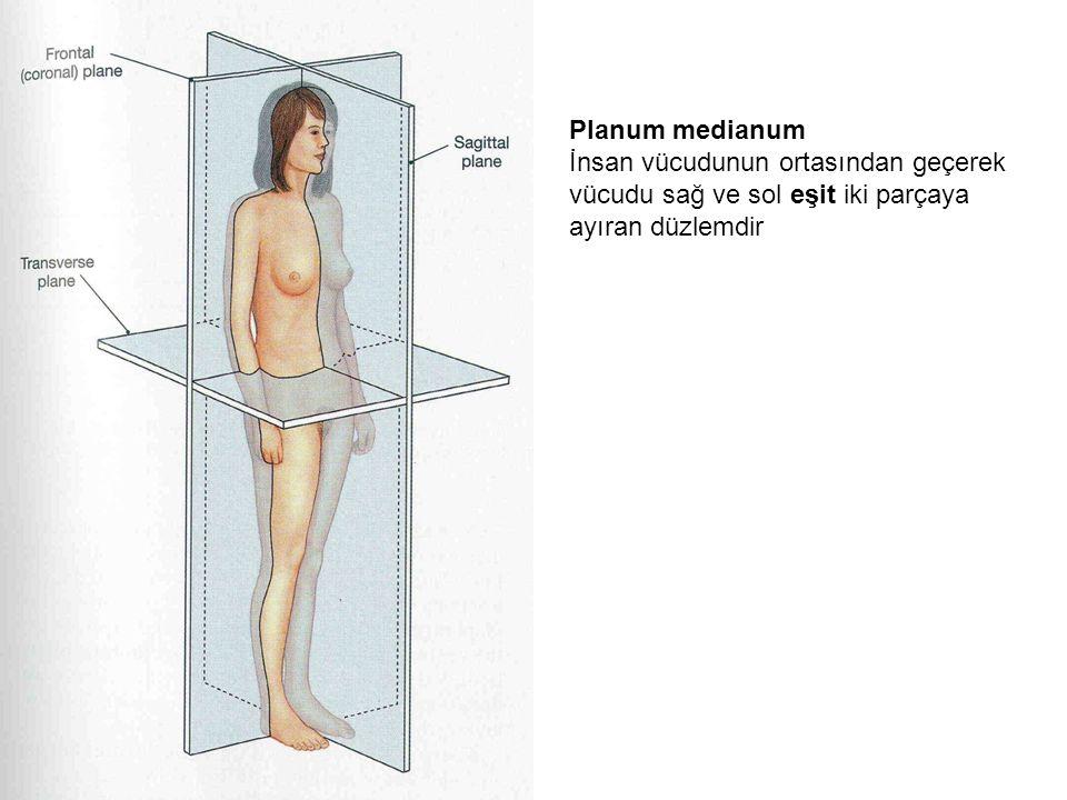 Planum medianum İnsan vücudunun ortasından geçerek vücudu sağ ve sol eşit iki parçaya ayıran düzlemdir
