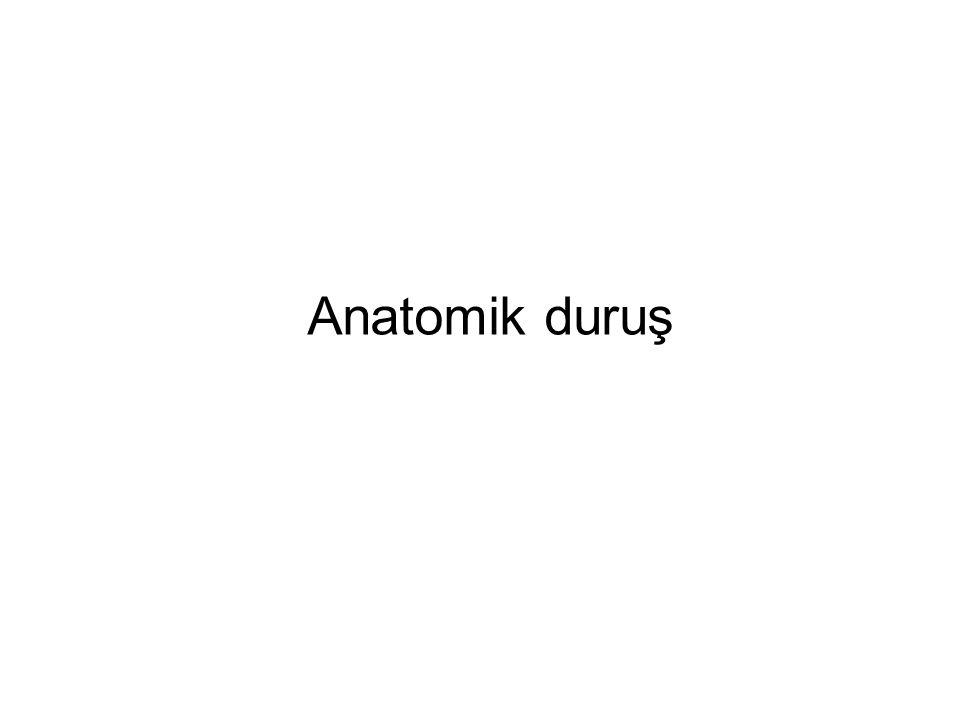 Anatomik duruş