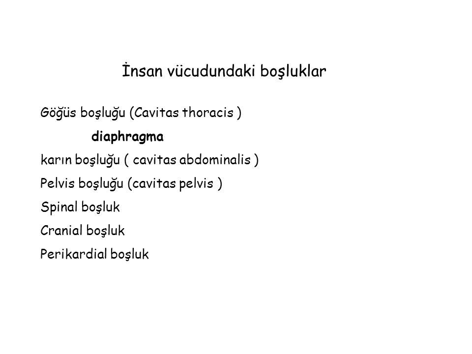 İnsan vücudundaki boşluklar Göğüs boşluğu (Cavitas thoracis ) diaphragma karın boşluğu ( cavitas abdominalis ) Pelvis boşluğu (cavitas pelvis ) Spinal boşluk Cranial boşluk Perikardial boşluk