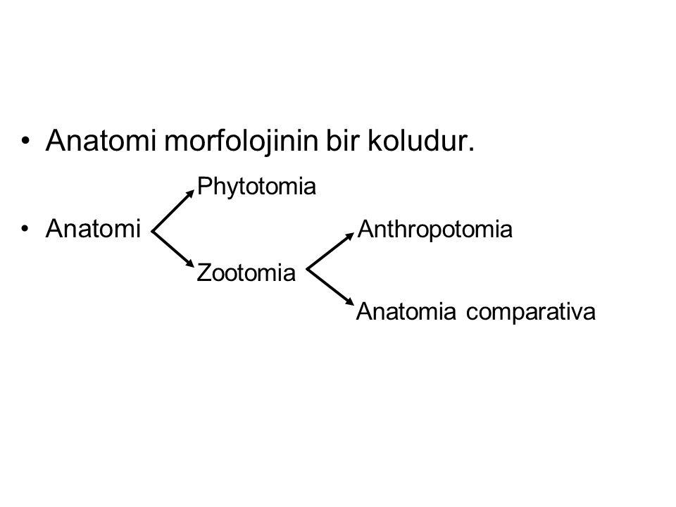 Anatomi morfolojinin bir koludur. Phytotomia Anatomi Anthropotomia Zootomia Anatomia comparativa