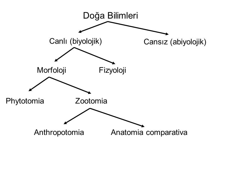 Doğa Bilimleri Canlı (biyolojik) Cansız (abiyolojik) Morfoloji PhytotomiaZootomia Fizyoloji Anatomia comparativaAnthropotomia