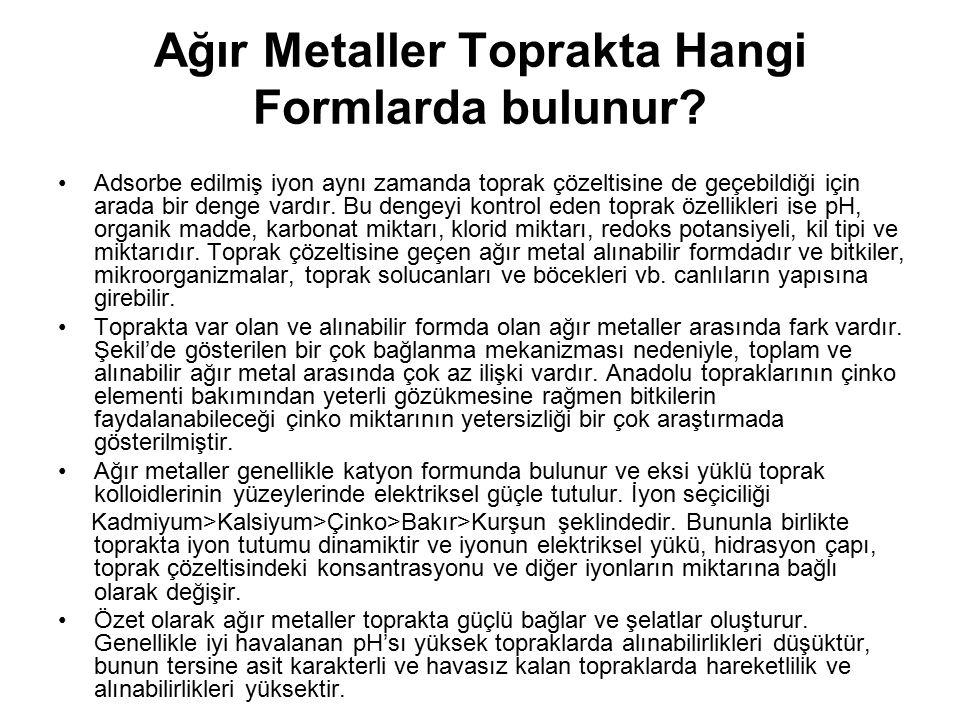 Ağır Metaller Toprakta Hangi Formlarda bulunur? Adsorbe edilmiş iyon aynı zamanda toprak çözeltisine de geçebildiği için arada bir denge vardır. Bu de