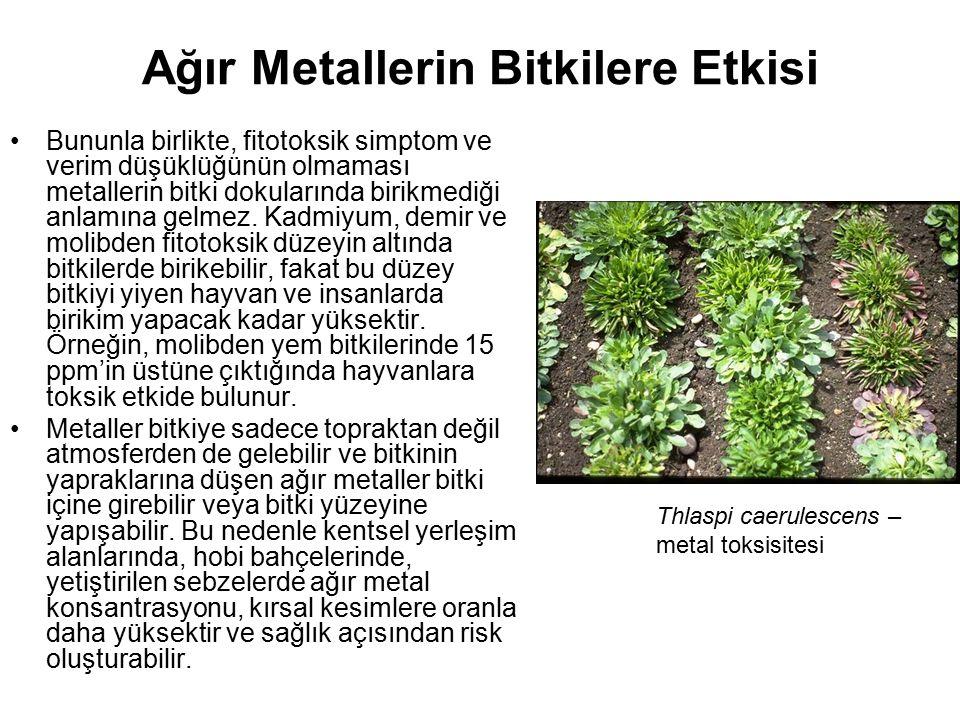 Ağır Metallerin Bitkilere Etkisi Bununla birlikte, fitotoksik simptom ve verim düşüklüğünün olmaması metallerin bitki dokularında birikmediği anlamına gelmez.