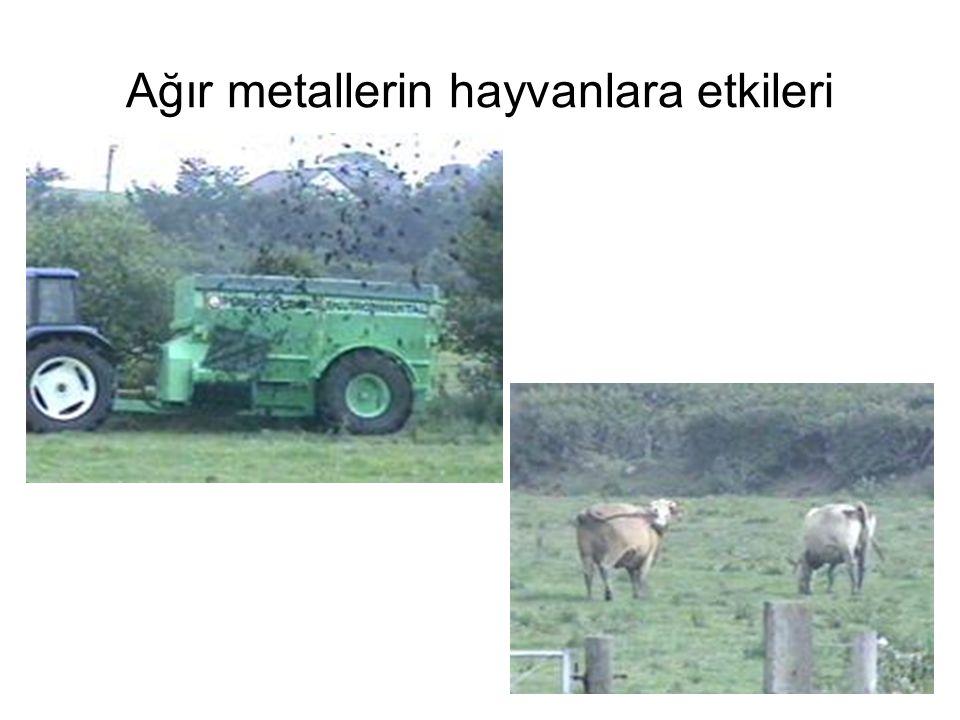 Ağır metallerin hayvanlara etkileri