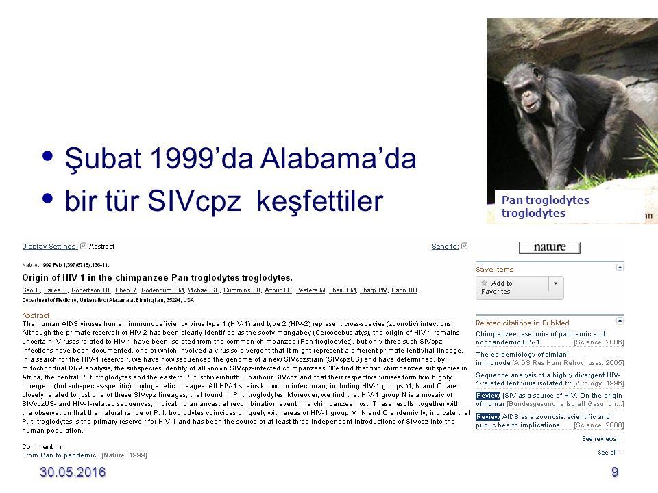 30.05.20169   Şubat 1999'da Alabama'da   bir tür SIVcpz keşfettiler Pan troglodytes troglodytes