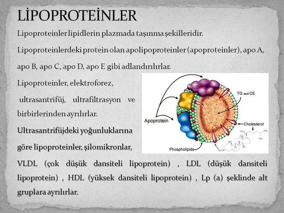 Lipoproteinler lipidlerin plazmada taşınma şekilleridir. Lipoproteinlerdeki protein olan apolipoproteinler (apoproteinler), apo A, apo B, apo C, apo D