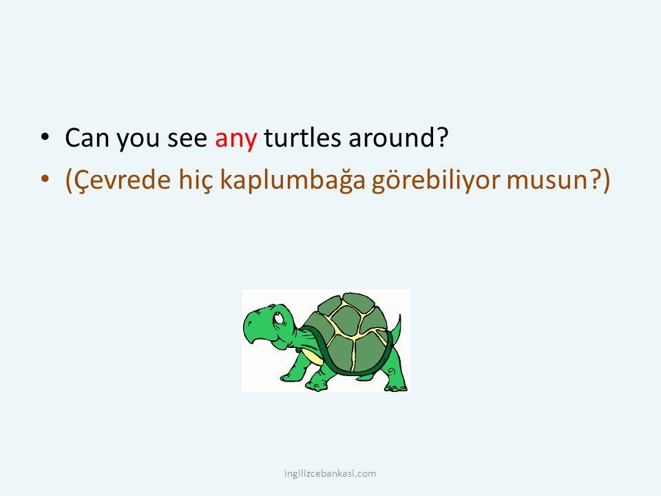 Can you see any turtles around? (Çevrede hiç kaplumbağa görebiliyor musun?) ingilizcebankasi.com