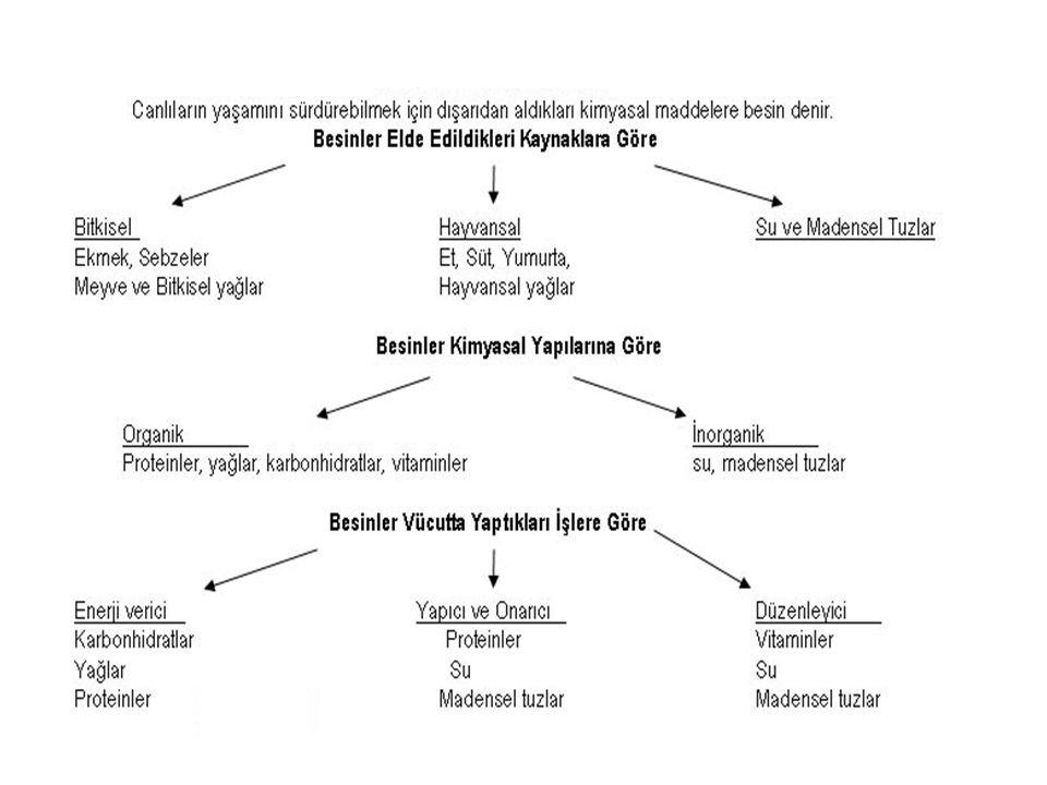 Midenin yapısı üç tabakadır: 1)En dışta zar (periton) 2)Ortada kas 3)En içte ise mukoza tabakası